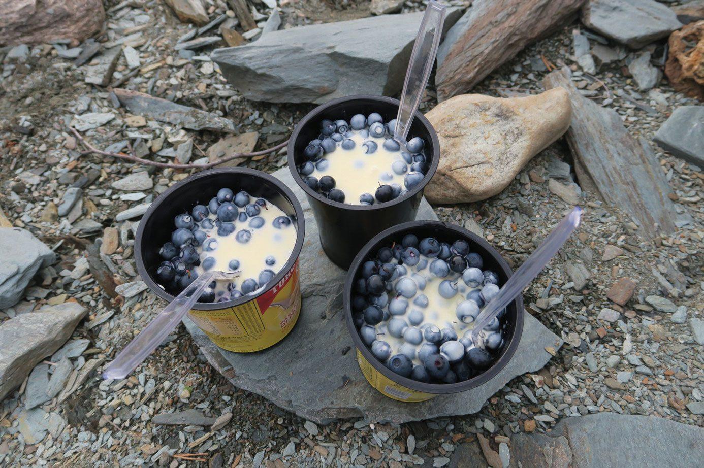 Naturen vartet opp med råvarer til desserten. Nyplukket blåbær med vaniljesaus.